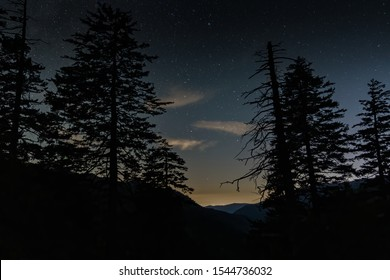Mountain Trees in front of a Starry Night Sky