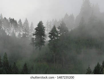 Mountain with trees in heavy fog