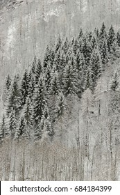 mountain trees with snow in winter