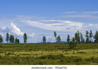 Mountain tundra with several crooked trees