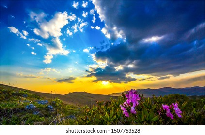 Mountain valley flowers sunset horizon. Sunset mountain valley flowers. Sunset pink flowers in mountain valley. Mountain valley pink flowers sunset view