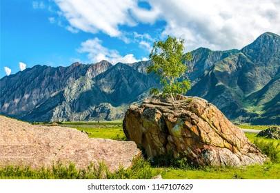 Mountain valley rock tree landscape. Mountain rock on mountain valley. Mountain valley rock view