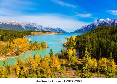 Mountain valley in the Rocky Mountains of Canada. Picturesque shores of artificial lake Abraham.  Concept of active, ecological and photo tourism. Water reflects the golden foliage of aspen