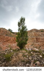mountain vegetationarid mountain vegetation