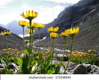 mountain view in the alps/ Arnica montana