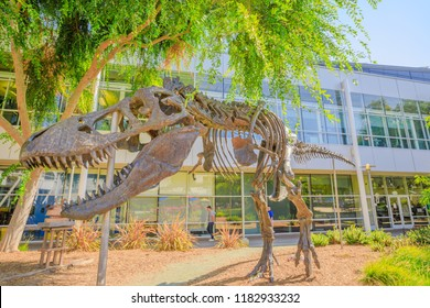 Mountain View, California, United States - August 13, 2018: wide angle view of Tyrannosaurus Rex skeleton at Googleplex Headquarters main campus in Silicon Valley, CA.