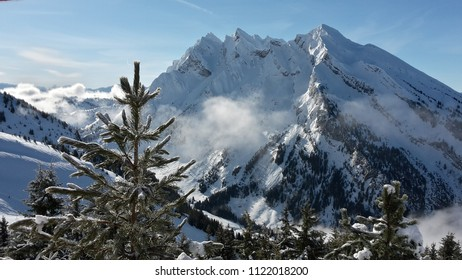 Mountain view with dramatic cliffs and close up pine trees in the foreground, at La Clusaz ski resort in the French Alps