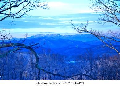 mountain view through tree branches
