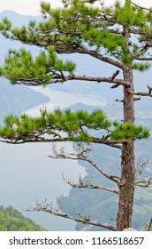 Mountain viewpoint. Beautiful nature. Drina river  and Tara mountain - Serbia