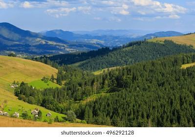 Mountain village. Summer country landscape with fir forest on slope (Carpathian, Ukraine, Verkhovyna district, Ivano-Frankivsk region).