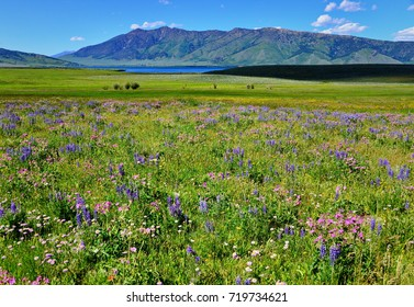 Mountain Wild flowers