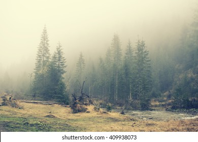 Mountain wildlife landscape. Coniferous forest in the mist. Spring, soft hipster colors