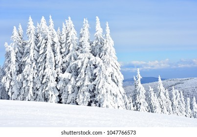 Mountain winter forest on a beautiful sunny day with blue sky