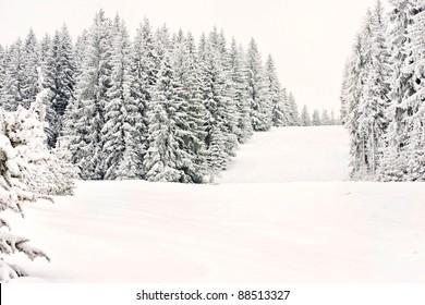 mountain winter forest ski snow runway sport