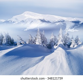 Mountain winter landscape. Sunny day. Fir trees on hill