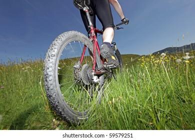 Mountainbiker in a meadow