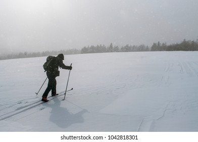 Mountaineer backcountry ski walking up along a snowy field with the backpack. Falling snow and distant forest in the background. Winter extreme trvellng concept. Minimalism. Copy space.