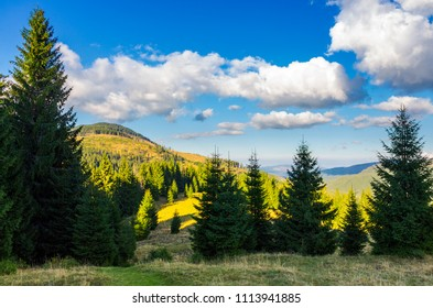 mountainous forest and clouds. tall spruce trees on hillside. mountain peak and valley in the distance. gorgeous cloudscape. Location Apuseni Natural Park of Romania. wonderful nature background