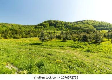 Mountainous green hills and clear blue sky