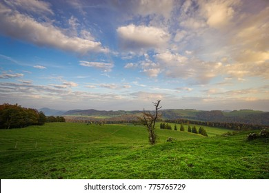 Mountainous landscape in the Jura Switzerland with lush green meadow grass and gnarly tree in foreground Sunset clouds