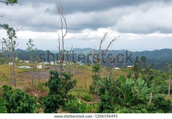 mountainous region of puerto rico in foothills of cerro punta near jayuya overlooking small village