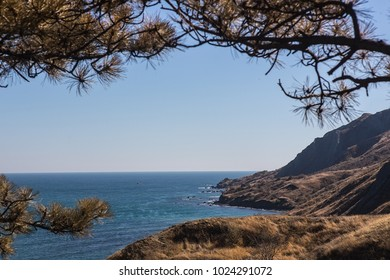 Mountainous seashore on a bright sunny day with a pine in the foreground.