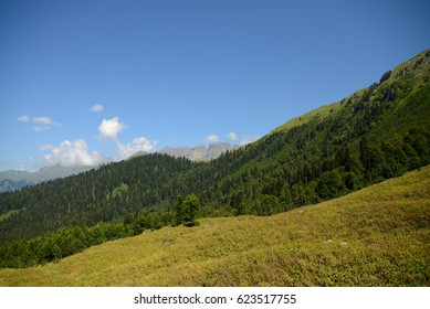 Mountains of Abkhazia, covered with evergreen coniferous forests, in the foreground, field grass