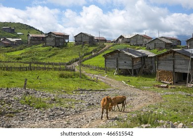 """""""Mountains of Adjara""""  A small Summer place called """"Tetrobi"""" where local people from Khulo take their cows for razing. Adjare, Georgia."""