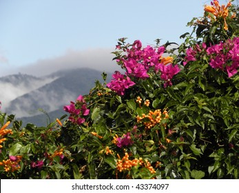 mountains and bougainvillea in san jose, costa rica