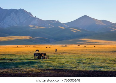 Mountains and cattle around Song Kul lake in a sunrise sun, Kyrgyzstan