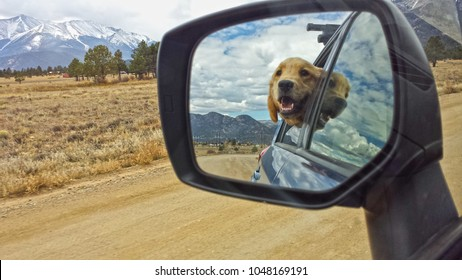 The mountains of Colorado are a perfect backdrop to the rear view mirror image of a Golden Retriever puppy hanging his head out the window of a car to enjoy the drive!