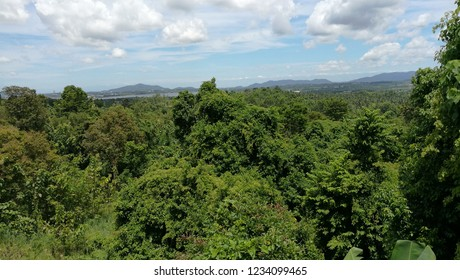 The mountains are covered with dense forests.