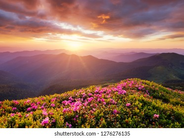 Mountains during flowers blossom and sunrise. Flowers on the mountain hills. Beautiful natural landscape at the summer time. Natural background