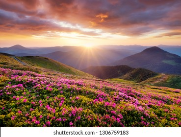Mountains during flowers blossom and sunrise. Flowers on the mountain hills. Beautiful natural landscape at the summer time. Mountain-image