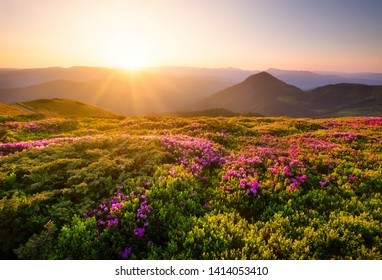 Mountains during flowers blossom and sunrise. Flowers on mountain hills. Natural landscape at the summer time. Mountains range. Mountain - image