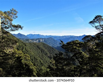 Mountains forest in New Zealand