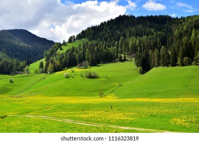 Mountains with a green forest of trees, below a blue sky with white clouds. The field of grass in the valley is full of yellow flowers.