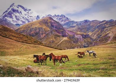 Mountains and horses Georgia.Kazbegi region,Vintage effect