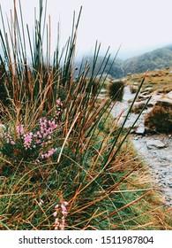 Mountains and Lakes in Snowdonia Mountains
