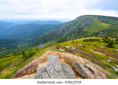 Mountains landscape with green plains and woods
