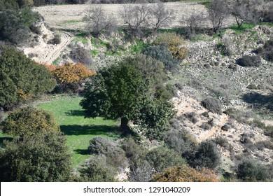 mountains Mediterranean olive trees blue skies sea side