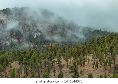 Mountains near Teide National Park. Old pine forest. Curved, gnarled ancient pines, dry fallen tree trunks and branches. Tenerife, Canary Islands, Spain. 2200m altitude.
