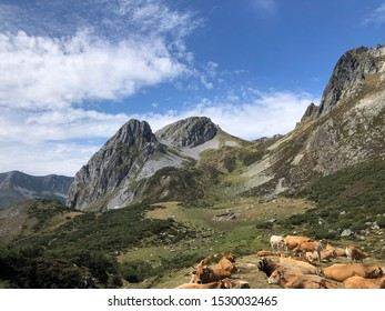 Mountains in Northern Spain with cows