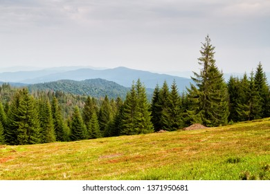 Mountains scenery. Panorama of grassland and forest in Gorce mountains. Carpathian mountains landscape, Poland. Gorczanski National Park, Poland