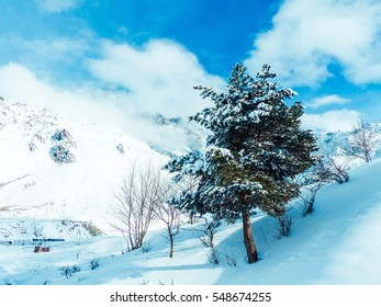 mountains, snow pine in snow