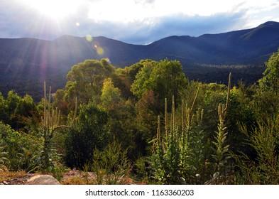 Mountains, sub alpine woodland and sun flare in Tidbinbilla Nature Reserve, near Canberra, Australian Capital Territory, Australia.