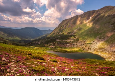 mountains summer lake image, picturesque blooming pink flowers on slope of mountain at morning sunlight, breathtaking floral nature background, Europe, Ukraine, Carpathians, Brebeneskul lake