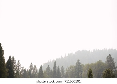 Mountains and Trees in Fog