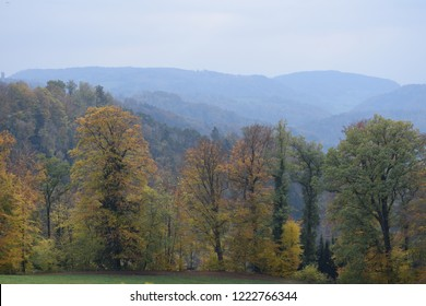 mountains and trees in uetliberg