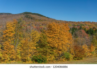 Mountainside with Peak Fall Colors on the Trees